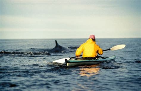 canoe kayak quebec sea kayaking with the whales grandes bergeronnes canada
