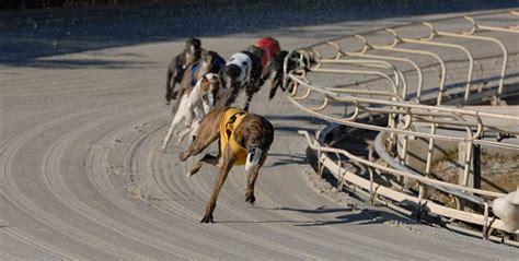 greyhound simulcast racing wagering daytona beach