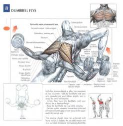 Dumbbell flat bench flys peak fat loss and fitness
