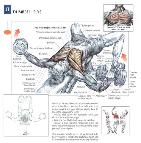 bench muscles dumbbell flat bench fly muscles hit chest delts tri