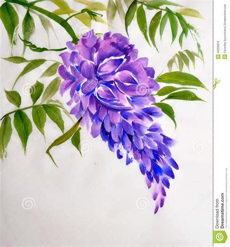foto glicine in fiore fiore di glicine illustrazione di stock immagine di fiore