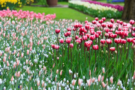 flowers blooming blooming flower garden free stock photo public domain