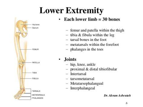 Upper Limb Skeletal Anatomy