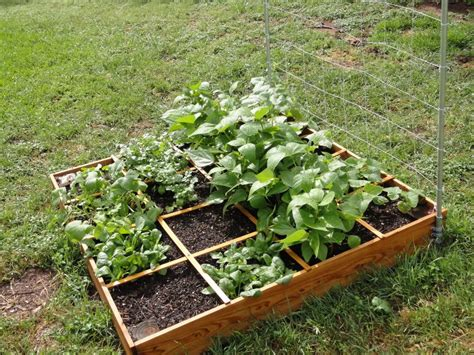 Small Vegetable Garden Layout Vegetable Garden Designs And Ideas