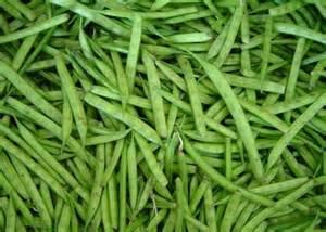 culture du haricot vert potager