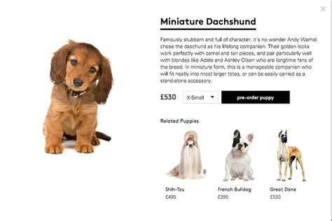 websites to sell puppies lyst admits canine collection was a hoax following social media backlash daily