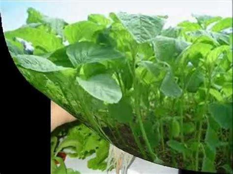 Harga Bibit Sayuran Eceran by 085 228 128 545 Jual Bibit Sayuran Impor Jual Bibit