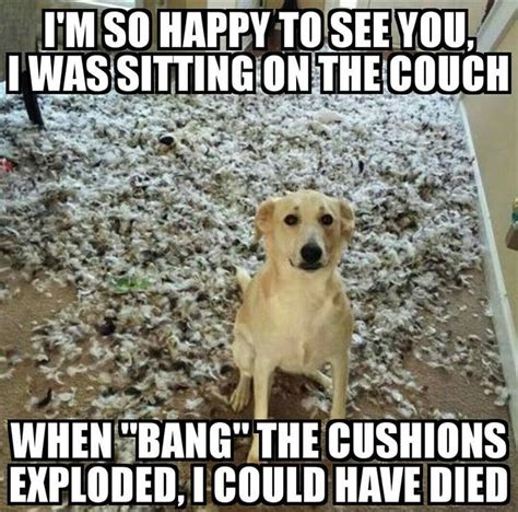 Funny Cute Animal Memes - funny animal picture dump of the day 26 pics