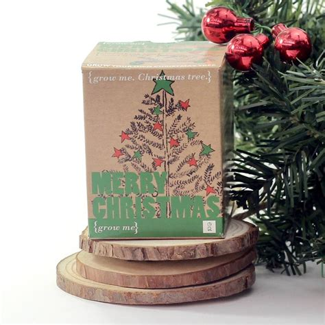 grow your own christmas tree by beecycle
