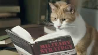 gifs anim 233 s sur les chats avatars mania