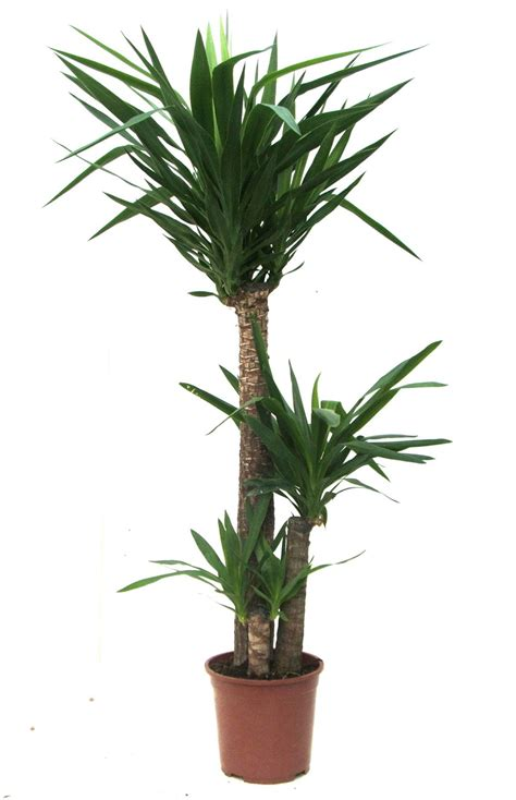 Indoor Plants by Bamboo Lamp Photo Bamboo House Plant