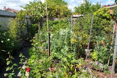 backyard permaculture australia grey cliffs permaculture
