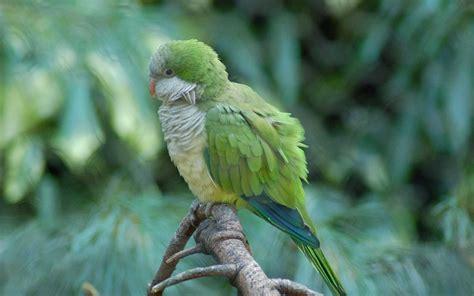 quaker parrot weneedfun