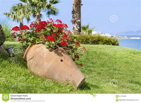 vasi di argilla vaso di argilla con i fiori di fioritura geranio su un