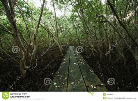 forrest woodworker broadwalk into mangrove forrest stock photo image 34964420