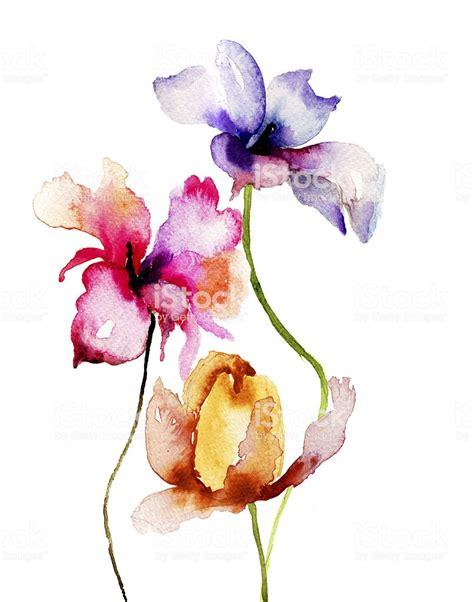 fiori ad acquerello illustrazione ad acquerello di fiori estivi immagini