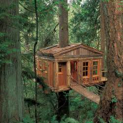 tree house amazing tree house wallpapers