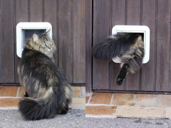 porta gatto porta per gatti
