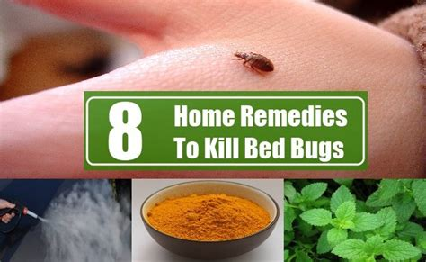 home remedies for getting rid of bed bugs 8 simple remedies that make your home bugs free without