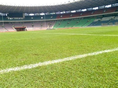 Bibit Rumput Lapangan Sepak Bola pusat rumput sintetis taman futsal dan vertical garden