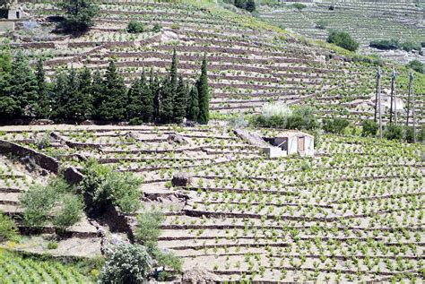Comptoir Agricole Du Languedoc by Port Banyuls Le Port De Plaisance De Banyuls Sur Mer