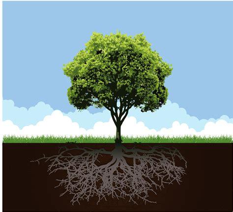 desain pohon dan akar