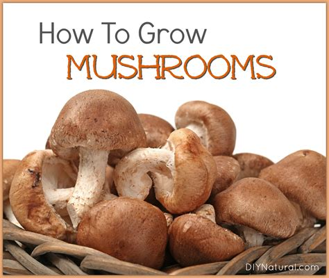 how to grow mushrooms naturally at home
