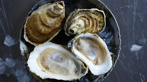 17 best images about oysters your guide to the south s best farmed oysters southern