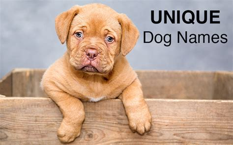 puppy names for a names great ideas for naming your puppy the happy puppy site