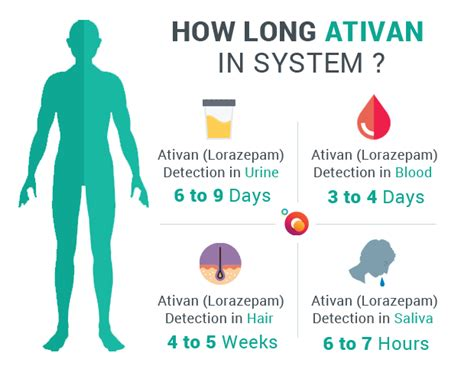 How To Detox From With Ativan by How Ativan Stays In Your System Blood And
