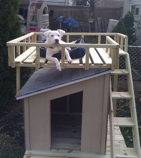 over the top dog houses 5 droolworthy diy dog house plans healthy paws