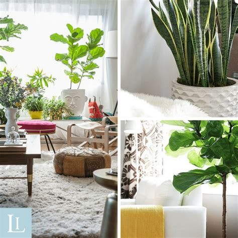 how to arrange indoor plants top 5 indoor plants and how to care for them