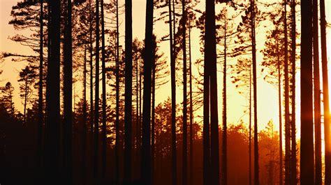 Woods Sunset Wallpaper | woods sunset wallpaper 1920x1080 32560
