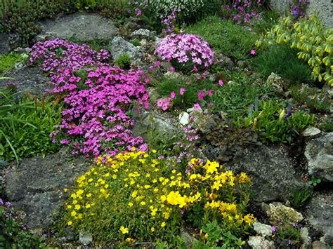 Rock Garden Perennials Small Zen Garden Rock Garden Plants Perennial Rock Garden Plants Garden Ideas Nanobuffet