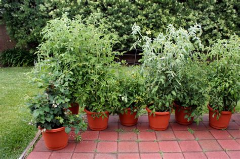 Why Grow Vegetables and Herbs in Pots?   Bonnie Plants