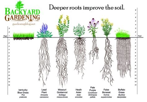 vegetable root depth how to add more topsoil the way backyard