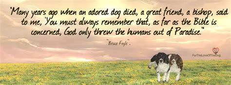 do all dogs go to heaven grieving the loss of your pet books do all dogs really go to heaven or did they never leave
