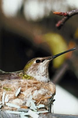 what type of flowers do hummingbirds like ehow