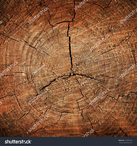 brown tree pics brown tree trunk texture background stock photo