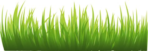 green wallpaper transparent grass png images pictures