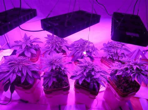 Led Grow Lights Vs Hps by Led Vs Hps Review Estagecraft