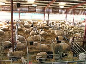 Sheep Lambing Sheds by Lambing Barns Gallery