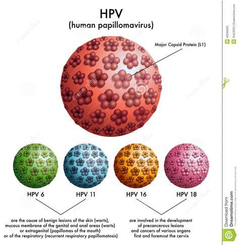 pap test e papilloma virus hpv human papillomavirus stock vector image 42596663