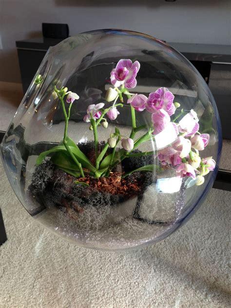 make an orchid terrarium in 5 minutes small garden ideas
