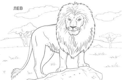Pages Realistic coloring pages realistic animal coloring pages