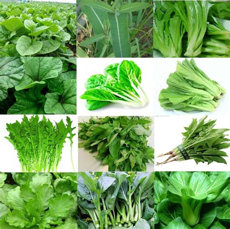 leafy spinach and its health benefits