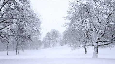 picture of snow falling snow stock footage video shutterstock