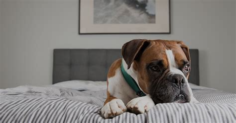 leaving a puppy alone at home for the time the risks of leaving your home alone samford pet resort