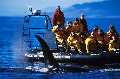 zodiac boat for sale victoria bc whale watching in bc british columbia travel and