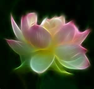 Abstract Lotus Beautiful Lotus Glow Abstract Beautiful Bright Floral